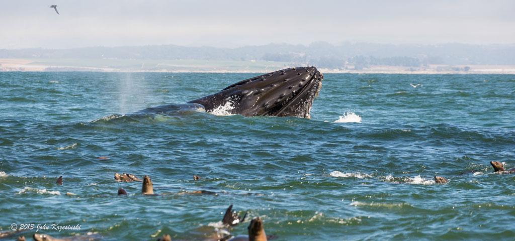 Avvistamento balena in Norvegia